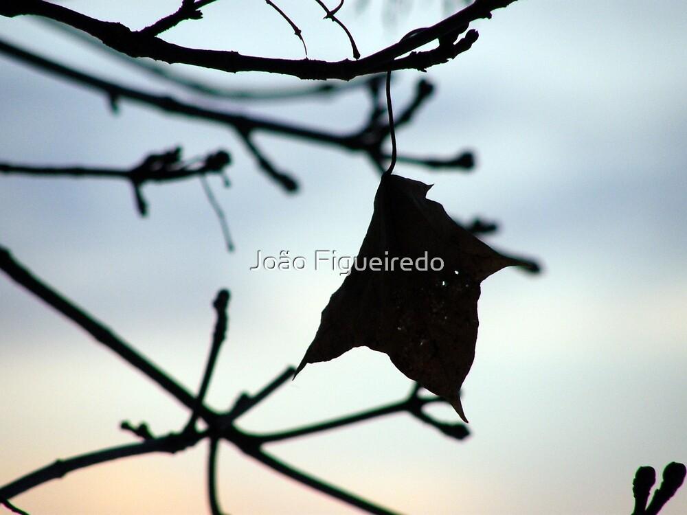 Autumn Charm by João Figueiredo