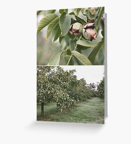 Katunga Walnuts Greeting Card