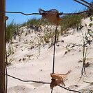 The Fence At The Beach 30 09 12 One by Robert Phillips
