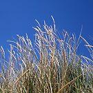 Beach Wheat Brighton/Trigg Beach Two by Robert Phillips