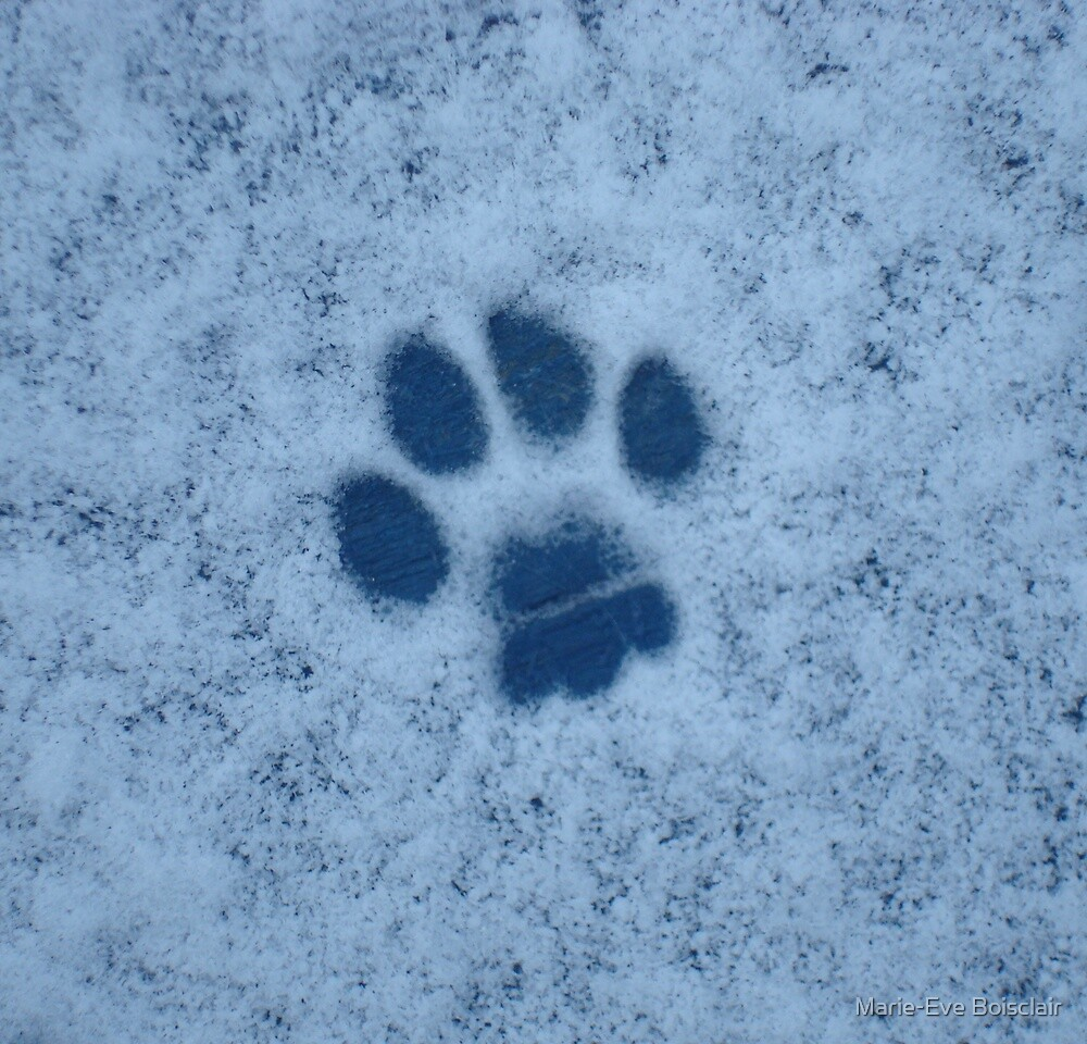 First paw in the snow by Marie-Eve Boisclair