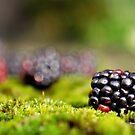 fallen fruit by Michelle McMahon
