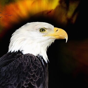 American Eagle by Lucindawind