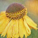 Goldilocks by Astrid Ewing Photography