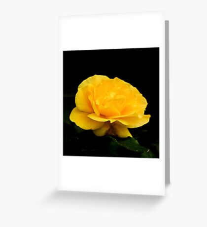 Golden Yellow Rose Isolated on Black Background Greeting Card