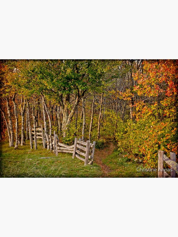 Sunset on an Autumn Wood by 2Bricks