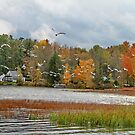 Lake Carmi Autumn 2012 by Deborah  Benoit