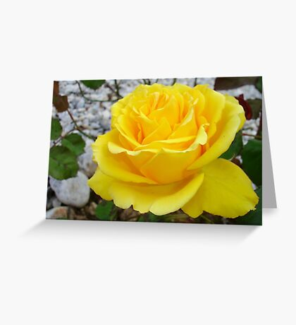 Beautiful Yellow Rose with Natural Garden Background Greeting Card