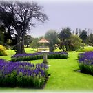 Botanical Gardens by cjcphotography