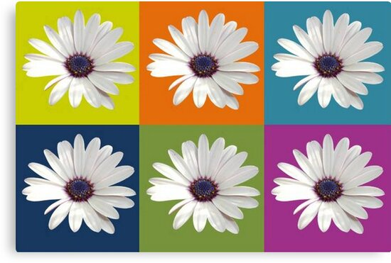 White African Daisy Collage On Bright Background by taiche
