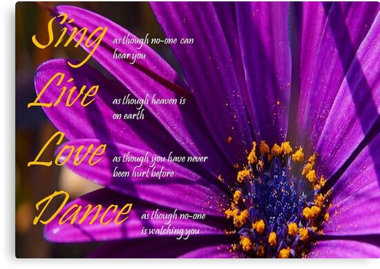Sing, Live, Love, Dance Quote Purple African Daisy  by taiche