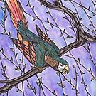 Parrot by samclaire