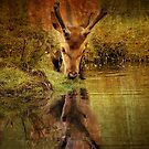 Deer Oh deer, do I look that old? by Alan Mattison