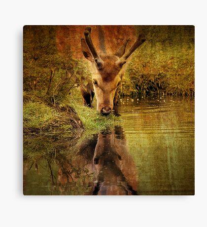 Deer Oh deer, do I look that old? Canvas Print
