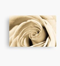 Creamy Rose Canvas Print