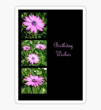 Birthday Wishes Greeting with Pink Daisies Sticker