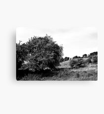 Ireland in Mono: Love Would Grow Canvas Print