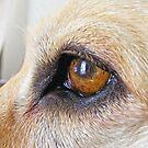 Labardoor (Bouncer eye) by Russell Voigt
