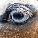 Horse (Moe Eye Close Up) by Russell Voigt