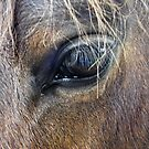 Horse eye  by Russell Voigt