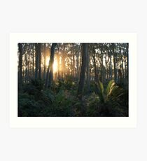 Sunlit Forest Art Print