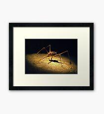 Cave Weta Framed Print
