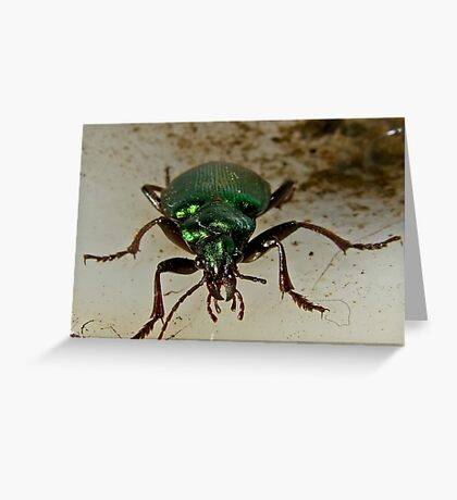 Beetle Stare down Greeting Card