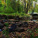Autumn Streams II by SunDwn