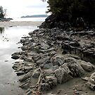 The Rocks - Tonquin Park, Tofino, BC by rsangsterkelly