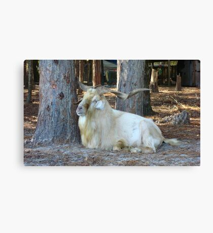 INDEED IT IS GOOD TO BE KING Canvas Print