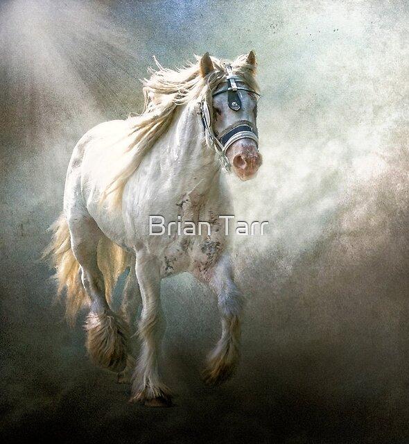 Silver Gypsy by Brian Tarr
