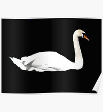 Swan on Black Sea! Poster