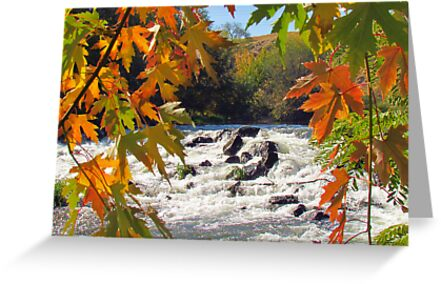 Autumn ~ Mother Nature at Her Finest  by Brenda Dahl