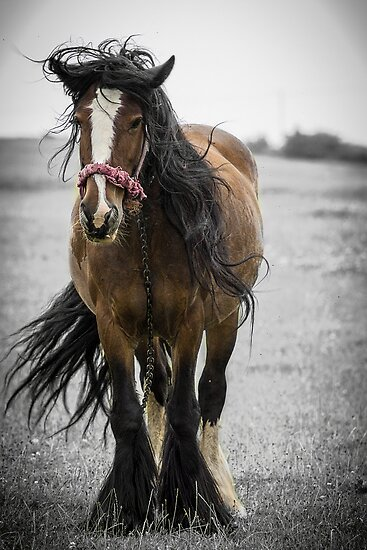 Bad Hair Day by Richard Downes