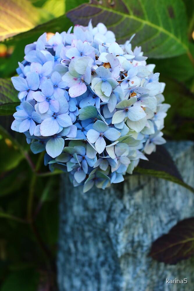 Blue Hortensia by karina5
