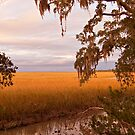 Wetlands in Southern Georgia by steini