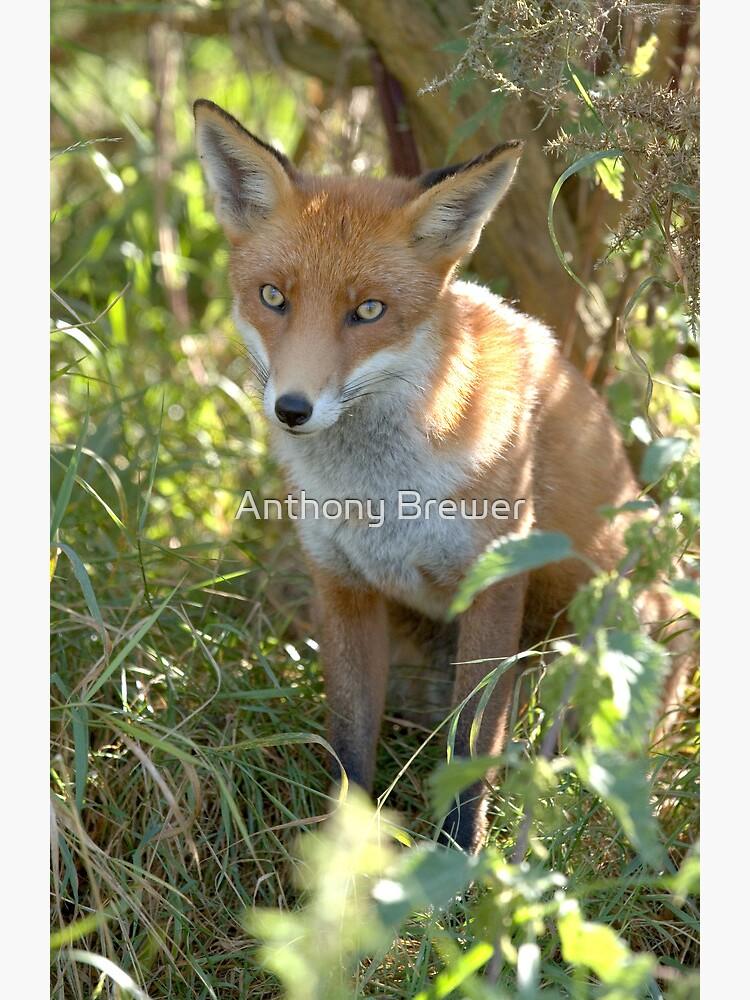 Demure fox by dailyanimals
