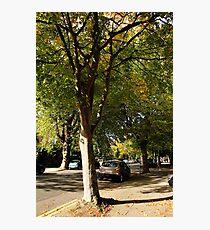 Sunlit Street Photographic Print