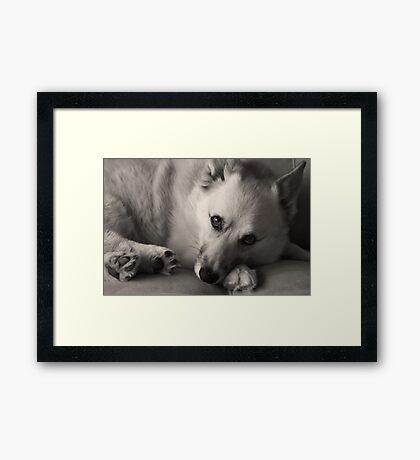 Those Eyes ~ Framed Print