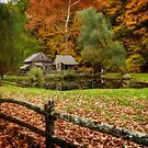 Autumn At Cuttalossa Farm V by Debra Fedchin