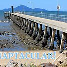Feature banner - Snaptacular by cathywillett