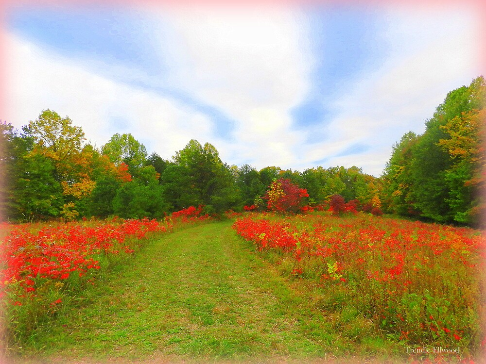 Sumac Hill in October Impression by TrendleEllwood