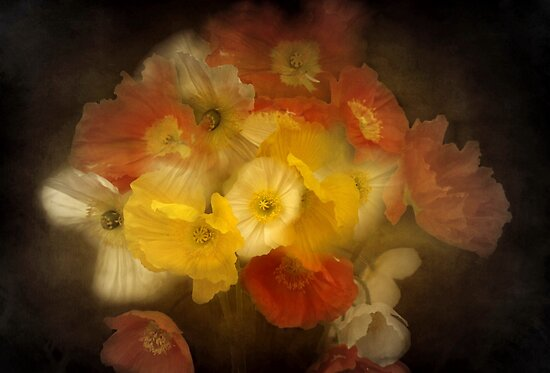 """"""" Forever Poppies..."""" by Rosehaven"""