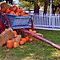 Pumpkins, Harvest and Thanksgiving - $20 November RB voucher