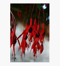 Fuchsia Flowers Close Up Photographic Print