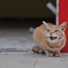 Alley Cat by punchdrunklove