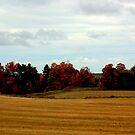 Fall Colors by Greta  McLaughlin