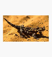Thorny Devil Photographic Print