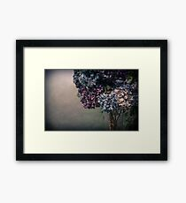 Hydrangea in the Fall Framed Print