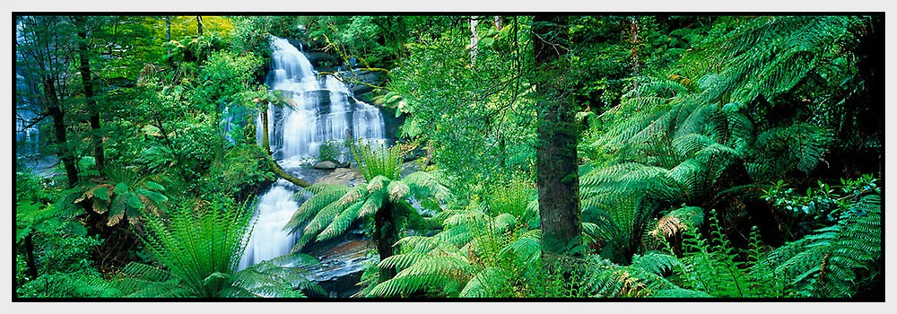 A Time to Heal, Great Otway National Park VIC by Chris Munn